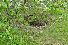 An old cave in the woods on the ground. An old cave in the wood on the ground inside apuseni green travel river corridor deep landscape exploration geologic stock photos
