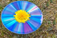 An old CD in the meadow