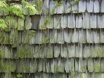 Old Cedar Barn Shingles with Vine. Old worn and weathered cedar shingles or shakes on a dilapidated barn in rural New Jersey Stock Photos