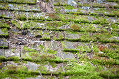 Old Cedar Roof Shingles Covered in Moss. Close up of old worn cedar roof shingles covered in lush green moss growth Stock Photography