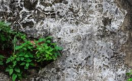 Old Cement dry with tree use background texture. Old Cement dry with tree use background. Brick cement dirty background texture, panorama, wide, concrete, wall royalty free stock photo