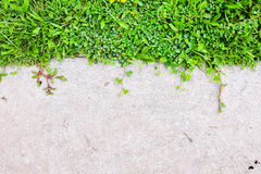 Old cement foor with grass. Background stock photo