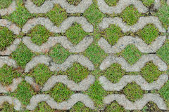Old cement foor with grass. Background stock image