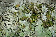 Old cement wall. With cracks and moss stock images