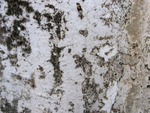 Old cement wall Stock Image