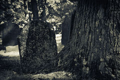 Old Cemeteries - Tombstone by Tree Royalty Free Stock Photo