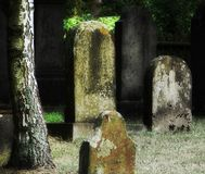 Old Cemetery. Shot of a tree and tombstones stock photography