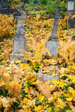 Old cemetery Royalty Free Stock Photos
