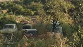 Old cemetery. Old cars in a field Stock Images