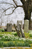 Tilted gravestones in spring. Old cemetery with tilted gravestones on the Isle of Skye in Scotland in spring with blooming snowdrops royalty free stock photography