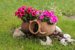 Old ceramic amphoras with pink and red petunia flowers. Old ceramic amphora with pink and red petunia flowers on a meadow royalty free stock photography