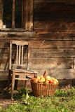Old chair and apples. Old chair and basketful of apples against wooden wall in sunny day Royalty Free Stock Photo
