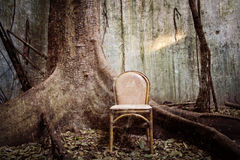 The old chair and the big tree Royalty Free Stock Photography