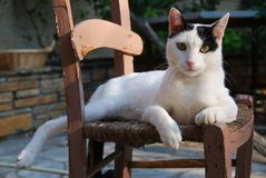 An old peasant wooden chair occupied by cat Royalty Free Stock Photo