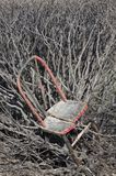 Old Chair in Thicket Stock Image