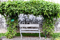 Old chair with vine Royalty Free Stock Images