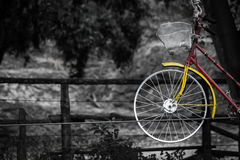 Old charming bicycle on the ropes Retro vintage. Bicycles on the ropes Retro vintage yellow red on nature,Color in black and white, Old charming bicycle Royalty Free Stock Photos