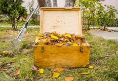 Old Chest and Autumn Atmosphere Stock Photos