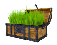 Old chest filled with green grass Stock Image
