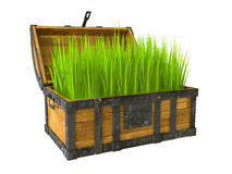 Old chest filled with green grass Royalty Free Stock Images