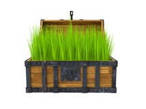 Old chest filled with green grass Royalty Free Stock Photography