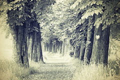 The old chestnut alley. Chestnut Alley in retro views Stock Photography