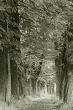 The old chestnut alley Stock Images