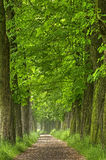 The old chestnut alley Royalty Free Stock Photography