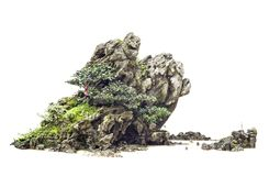 Old chinese bonsai Royalty Free Stock Photography