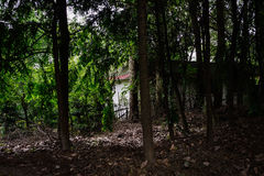 Old Chinese house behind shady woods in sunny summer Royalty Free Stock Images