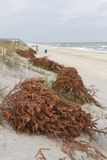 Old Christmas Trees Line the Beach Stock Photography