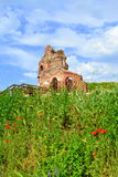 Old church ruins in summer vegetation Stock Images