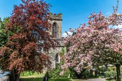 Old church surrounded by pink and red spring blossom. Old Church tower and belfry surrounded with pink and red spring blossom Royalty Free Stock Images