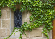 Old church window with ivy around window Royalty Free Stock Images