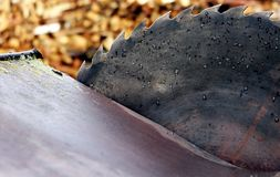 Old circular saw blade and wood logs background Stock Photo