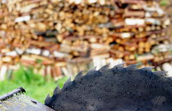 Old circular saw blade and wood logs background Stock Image
