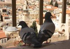 Old City of Jerusalem. Pigeons look at the Old City of Jerusalem. Top veiw Royalty Free Stock Photo