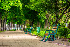Old city park with benches. Area of ​​the old city park with  bench under the chestnut tree Stock Photos