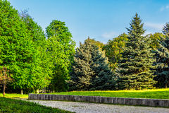 Old city park with chestnut and conifer trees. Area of ​​the old city park with lantern near cobble path under the conifer and chestnut trees Stock Image