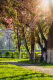 Old city park with lantern. Area of the old city park with lantern near bench under japanese cherry tree Stock Photography