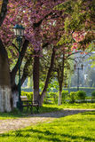 Old city park with lantern. Area of the old city park with lantern near bench under japanese cherry tree Stock Photo