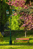 Old city park with lantern. Area of the old city park with lantern near bench under japanese cherry tree Stock Photos