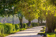 Old city park with lantern. Area of the old city park with lantern near bench under japanese cherry tree in sun light Royalty Free Stock Photo