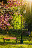 Old city park with lantern in sun light. Area of the old city park with lantern near bench under japanese cherry tree in sun light Stock Images