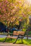 Old city park with lantern in sun light. Area of the old city park with lantern near bench under japanese cherry tree in sun light Stock Photos
