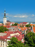 Old City of Tallinn in the morning Stock Images