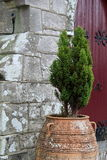 Old clay pot with shrub leaning against stone church Royalty Free Stock Images