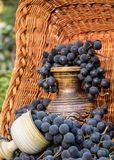 Old clay wine jug surrounded by black grape bunches Royalty Free Stock Image