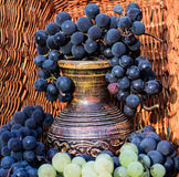 Old clay wine jug surrounded by grape bunches Stock Photos