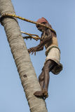 Old climber on coconut tree Royalty Free Stock Photo